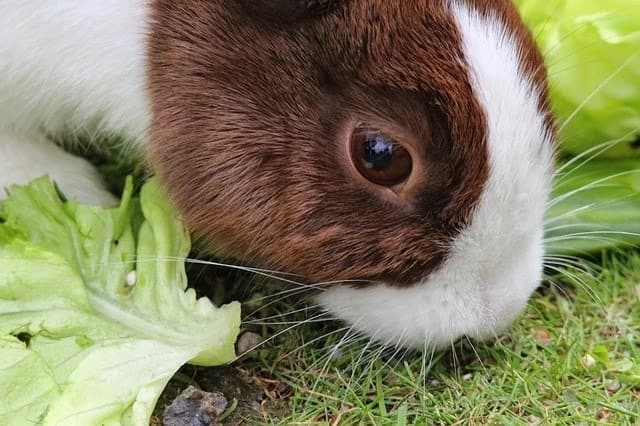 rabbit market in kenya,Success stories on rabbit farming in Kenya,commercial rabbit farming in kenya