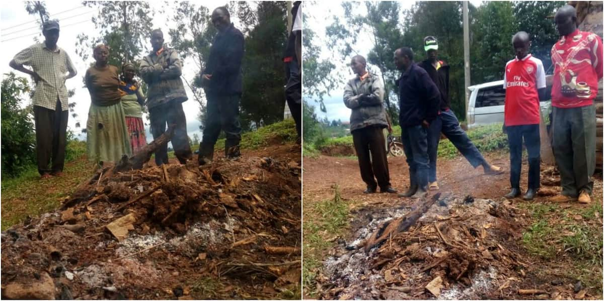 Giant mugumo tree falls and mysteriously catches fire in Murang'a county