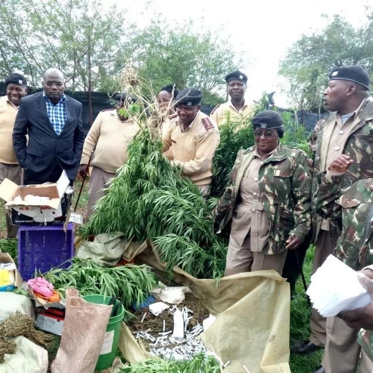Kiongozi wa kanisa asakwa na maafisa wa polisi kwa kuwa na shamba la Bangi Naivasha