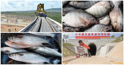 Government lifts ban on Chinese fish imports