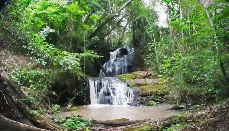 A guide to Karura Forest fun filled actvities