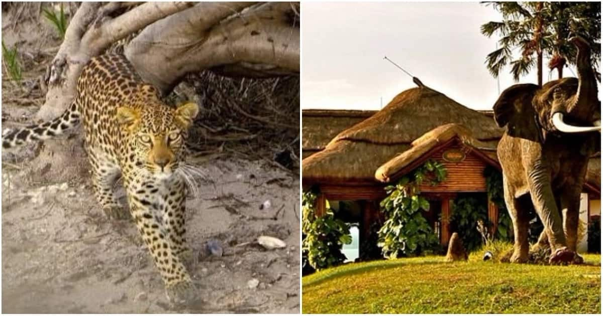 Mweya Safari Lodge (right), Queen Elizabeth National Park, Uganda Mango African Safaris.