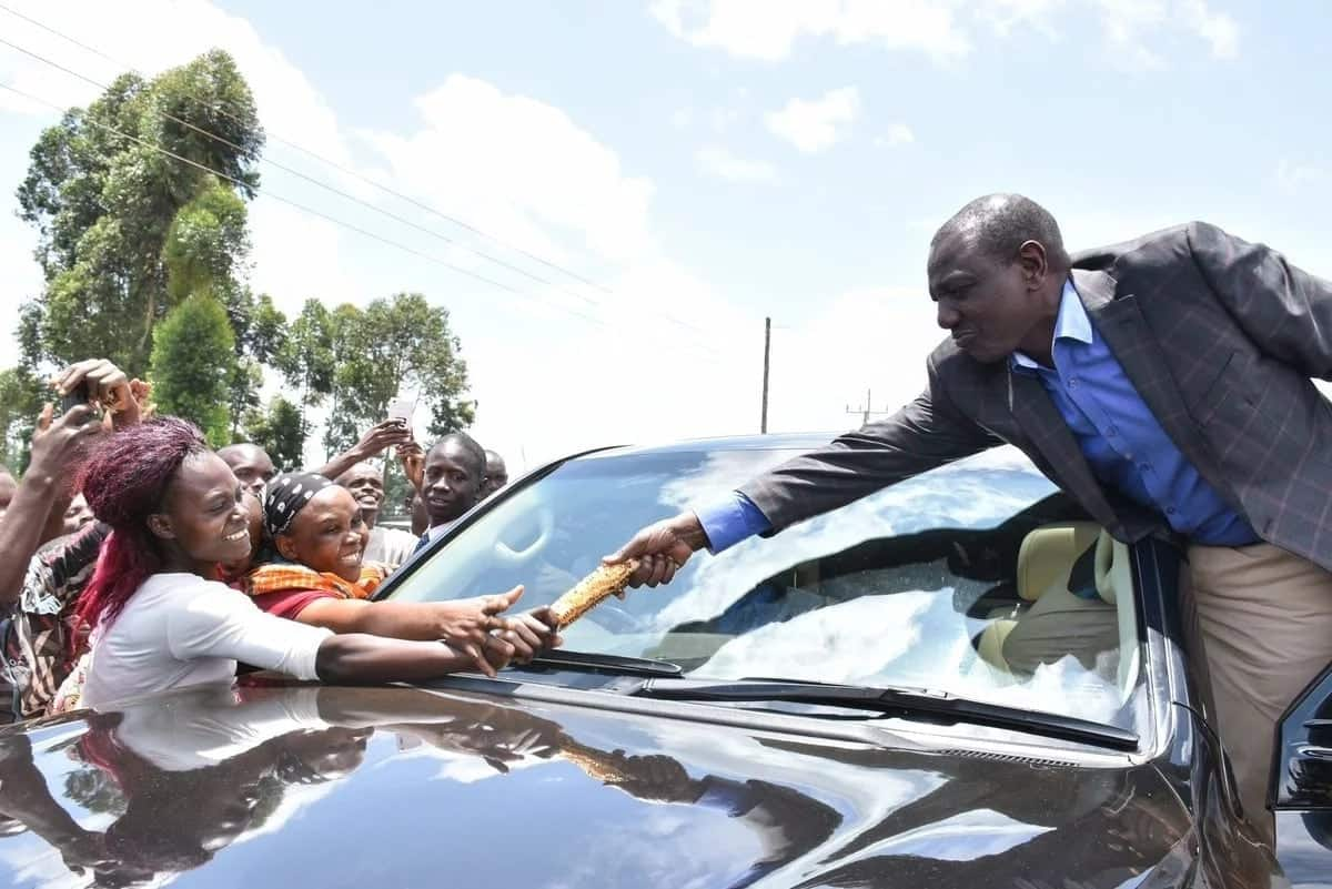 William Ruto in his hustler element, buys roast maize for supporters