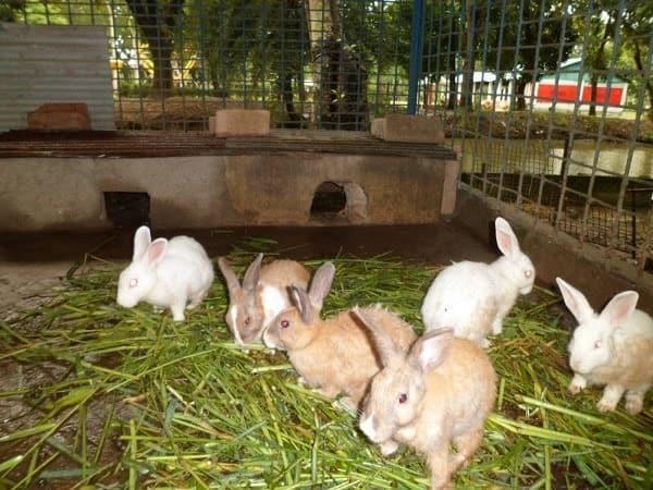 rabbit farming kenya,Success stories on rabbit farming in Kenya,commercial rabbit farming in kenya