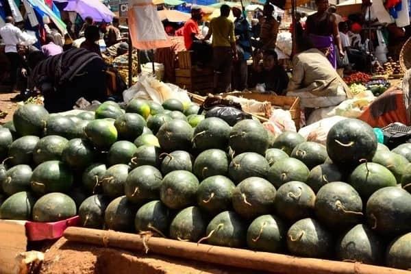 watermelon market in kenya, watermelon farming areas in kenya, watermelon farming techniques in kenya