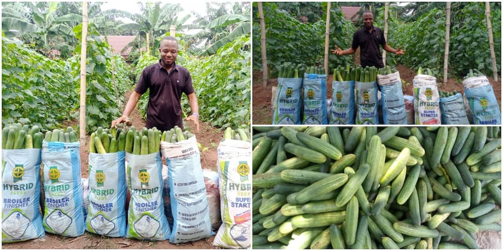 William Eke, a graduate of IMSU, went into farming on a full-time basis.
