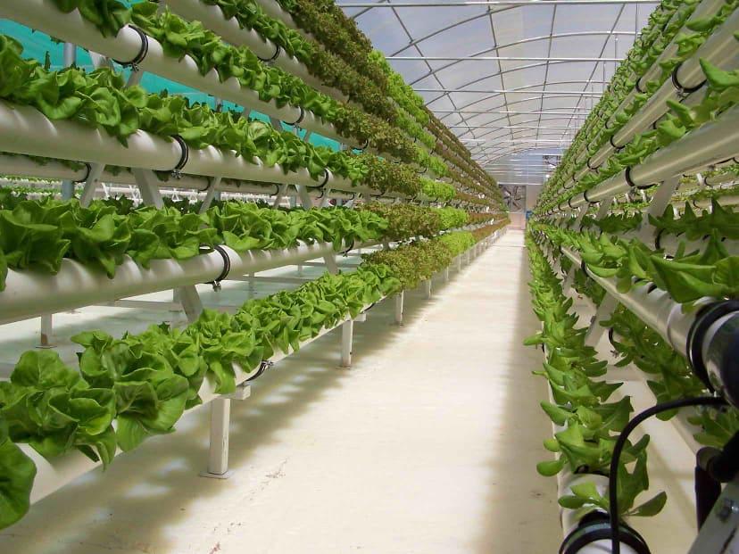 Hydroponic farming in Kenya