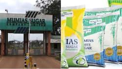 Mumias Sugar Company sinks further into KSh 15 billion loss