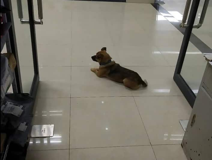 Man's best friend: Loyal dog waits for months at hospital after owner dies from COVID-19