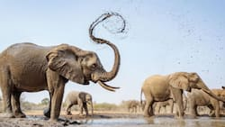 Namibia to auction 170 elephants due to drought, increased population