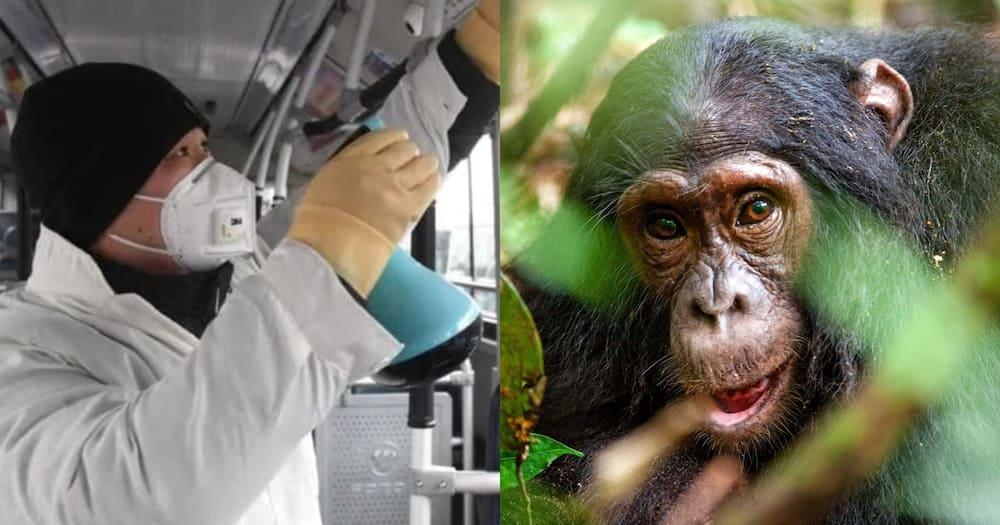 Daktari Aliyekuwa Amalizwa na Virusi vya Nyani Nchini China