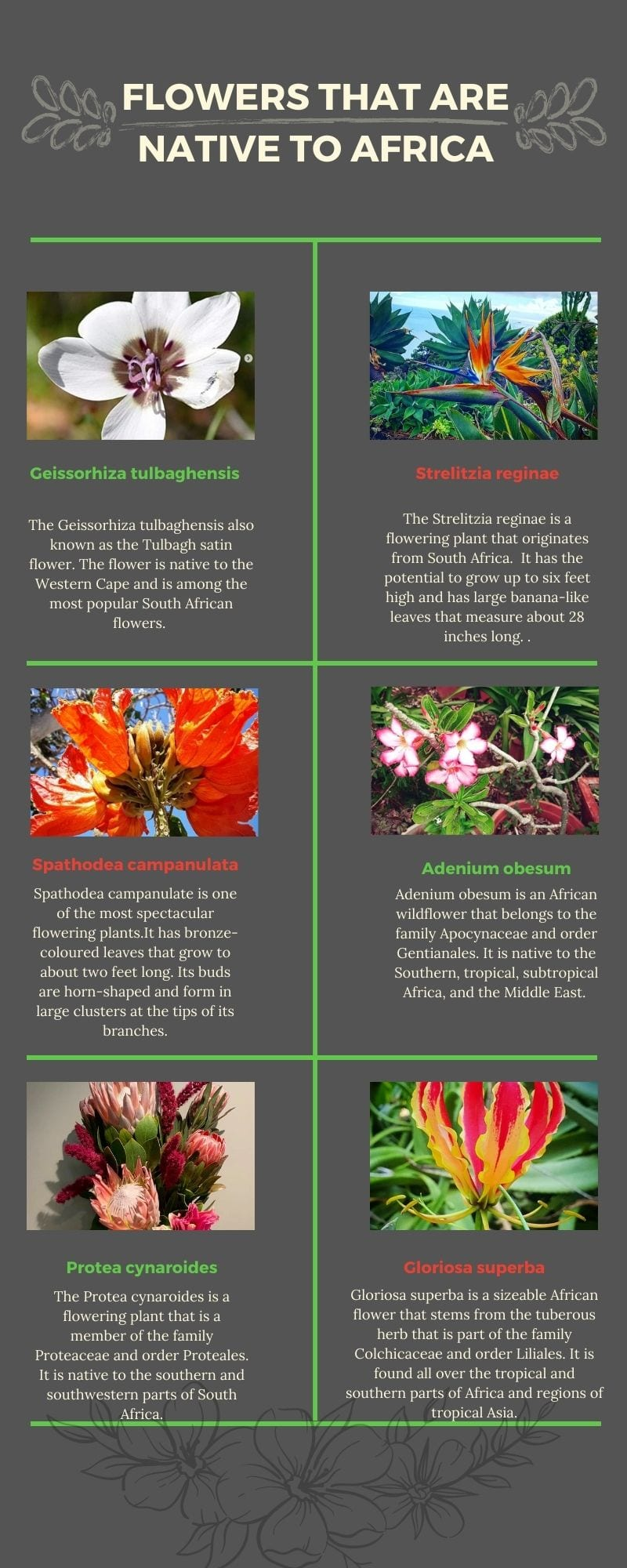 flowers that are native to Africa with pictures