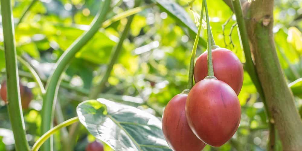 agribusiness ideas in Kenya