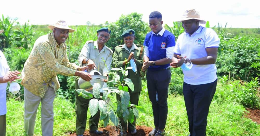 Mount Kenya University to Open Up 20-Acre Botanic Garden to Public for Research, Leisure