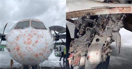 Scare as Tanzania airline Precision air flies into birds