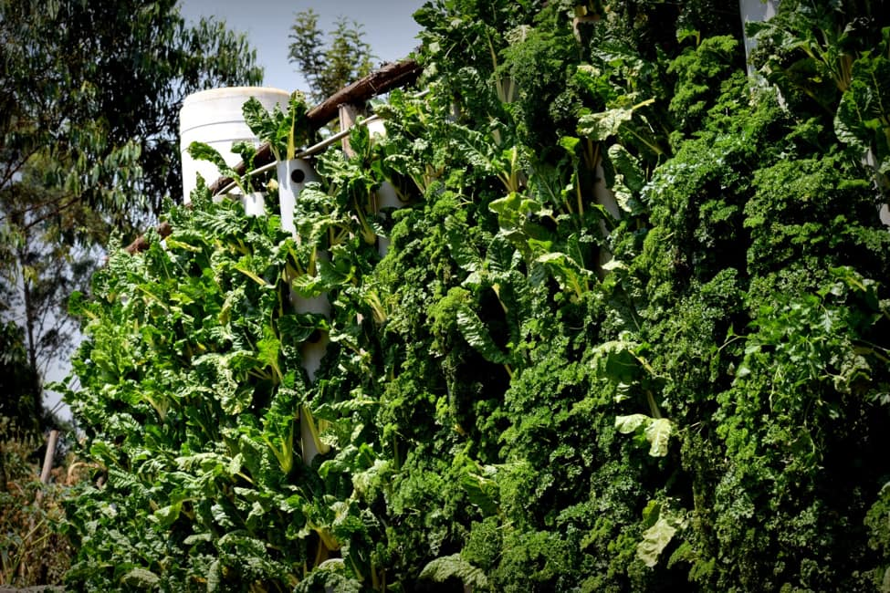 hydroponic supplies in kenya