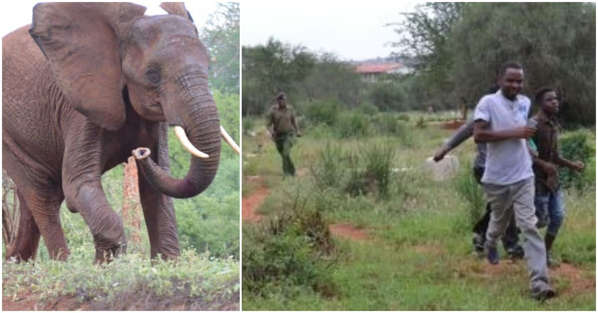 Police officers forced to run for dear life after elephant storms Voi police station