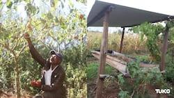 Nyandarua Farmer Using Worms to Make Organic Manure Rakes in KSh 200k Monthly