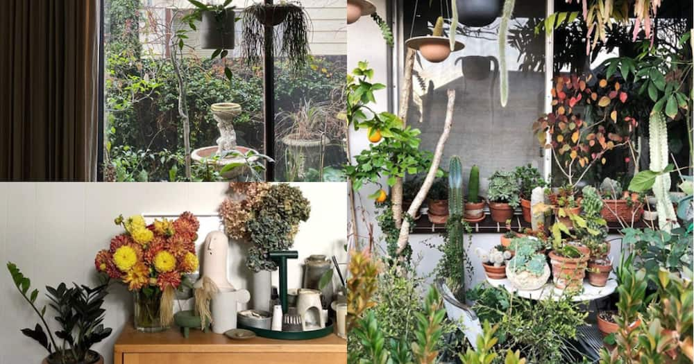 Architect uses more than 400 plants to turn his home into tiny forest