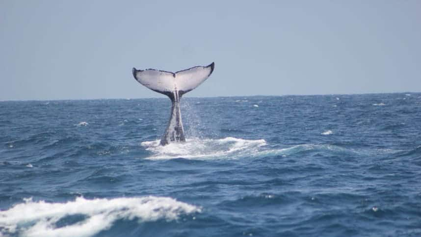 UK woman infuriates Kenyans after saying she discovered whales in the country