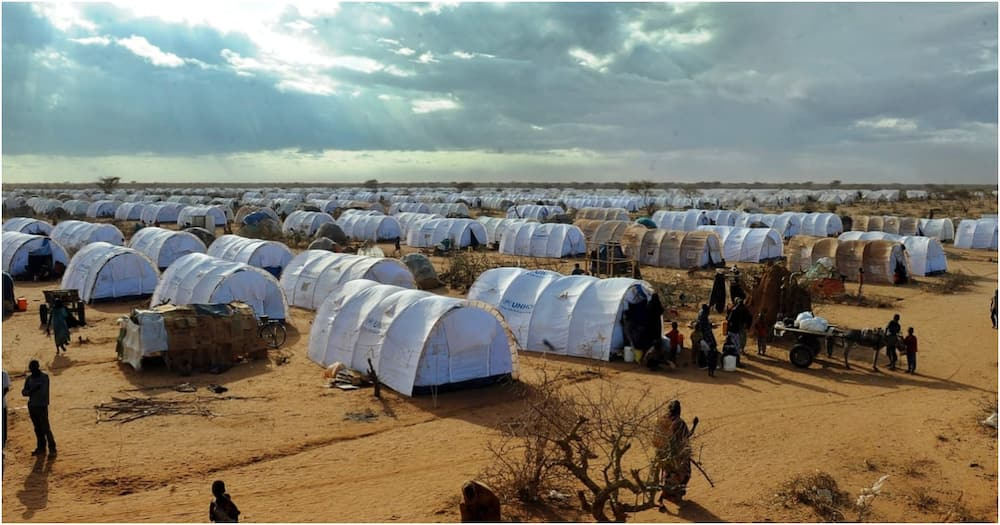 Govt to deregister cunning Kenyans benefiting from refugee donations