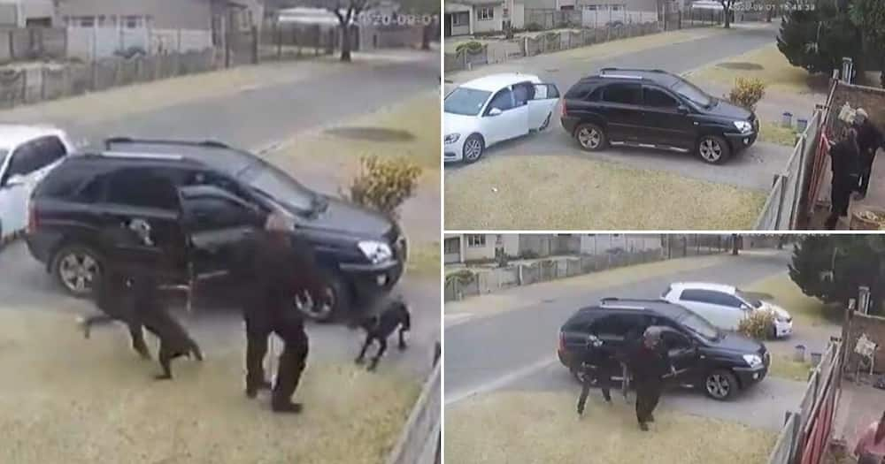 Video shows brave dog trying to protect owner against armed robber