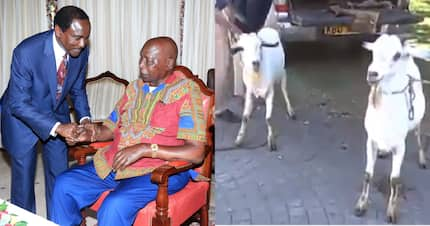 Wiper leader Kalonzo Musyoka gifts retired president Moi with two goats
