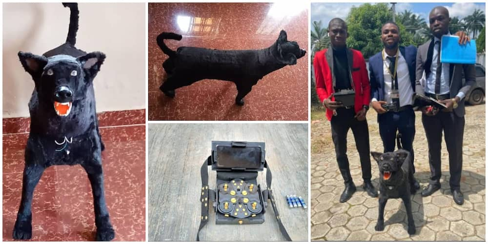 Nigerian students create robotic dog that is controlled with remote as final year project, photos cause stir.