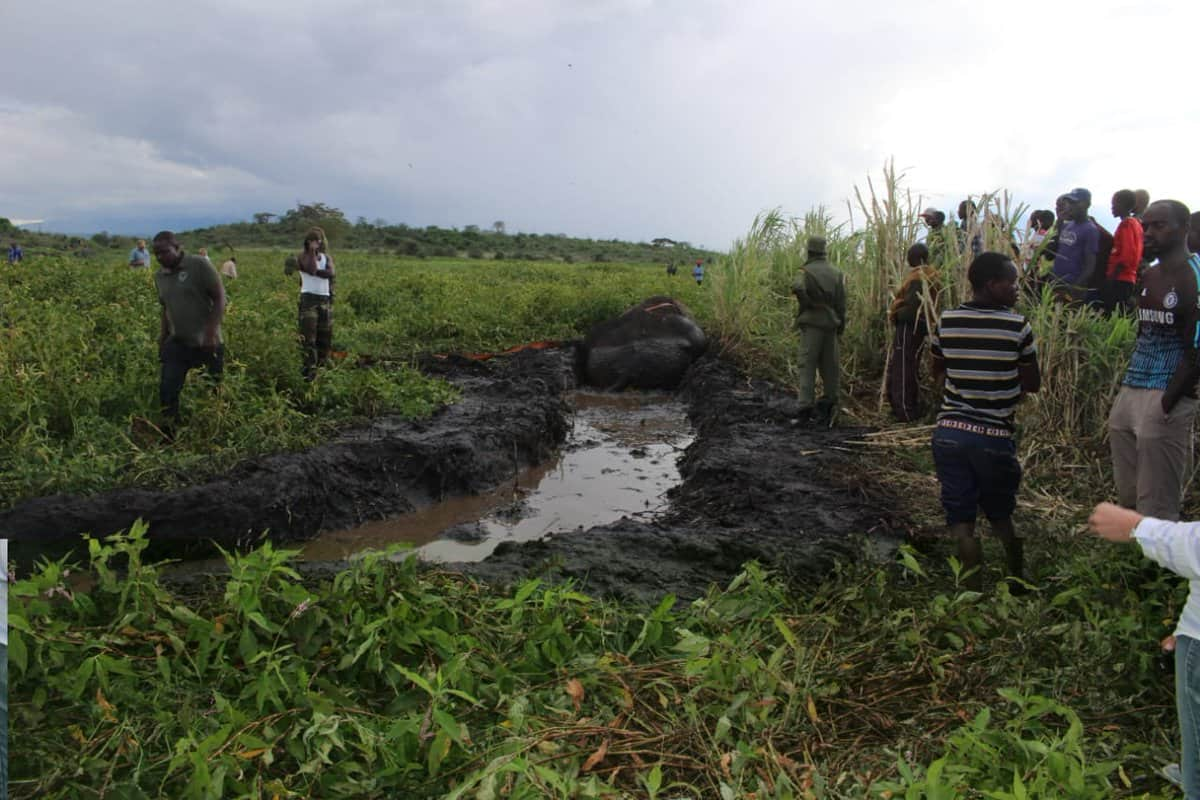 Land cruisers, tractor deployed to rescue Kenya's largest elephant stuck in mud for hours