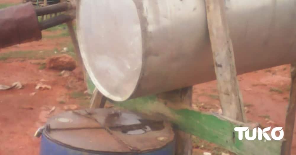 The art of condensing water in Eburu, Naivasha. Photo: Dennis Lubanga/Tuko.co.ke.