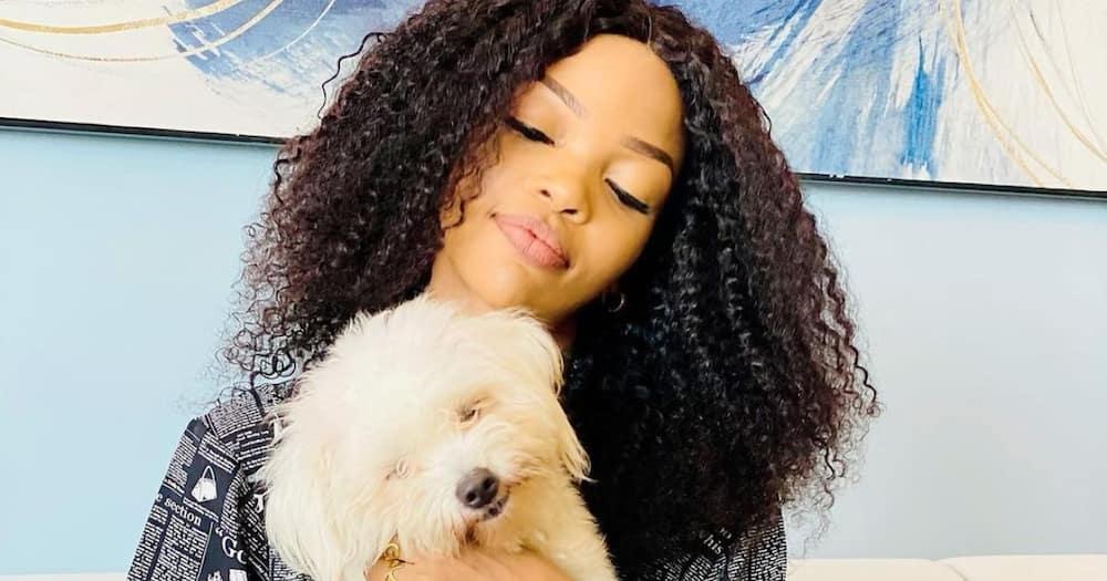 Wema Sepetu Offers KSh 95k Reward for Her Lost Celebrity Dog Vanilla