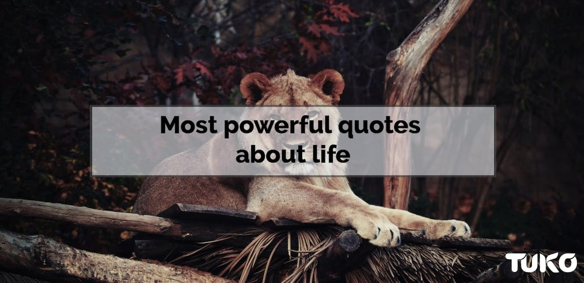 Most powerful quotes about life
