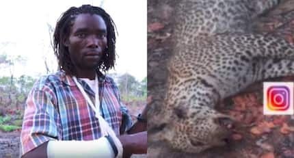Tanzania man single-handedly kills leopard which tried attacking him