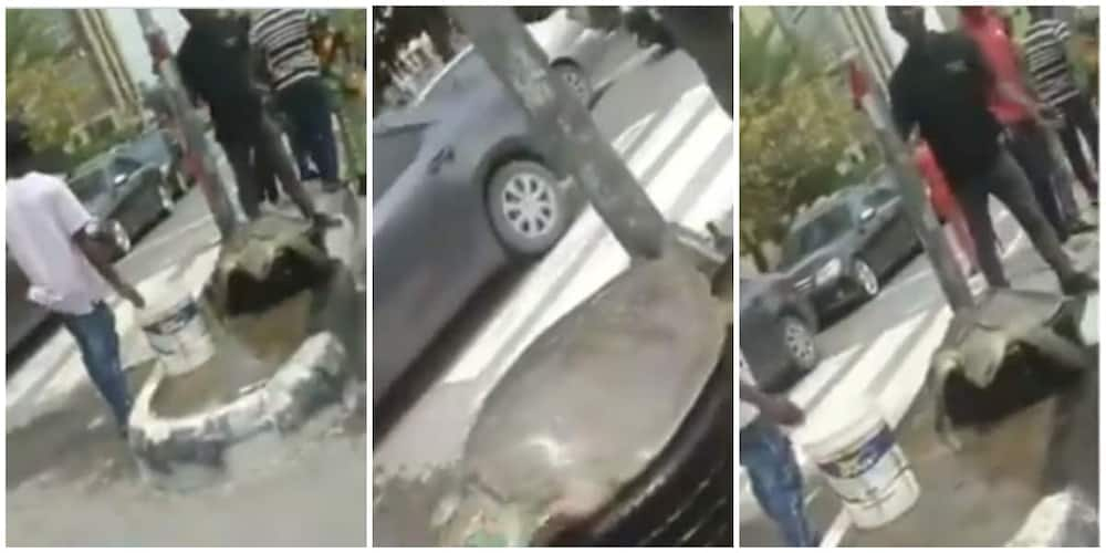 Wow! Giant Turtle Spotted on Lagos Street in Emerging Video