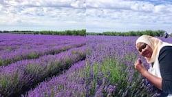 Lavender yavutia watalii na kuwatajirisha wakazi wa kijiji cha Sigong, Pili Mwinyi