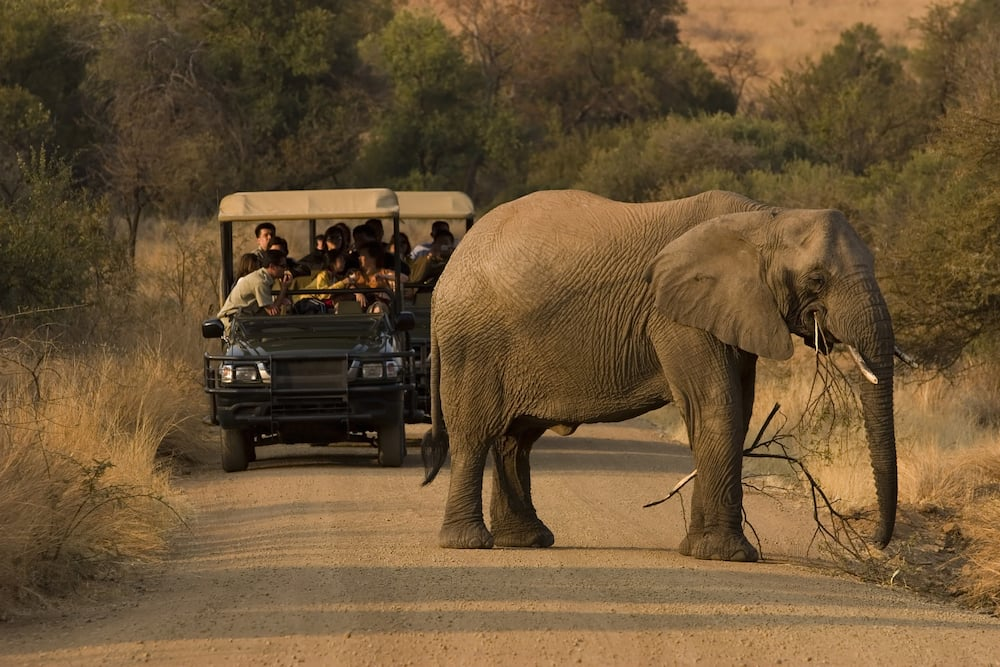 How do I start a tour and travel company in Kenya?