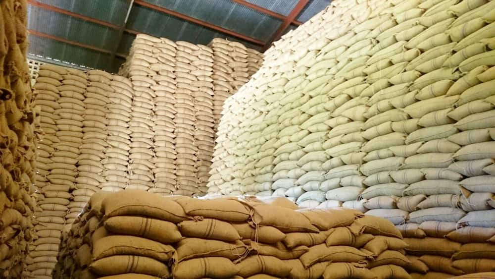 Opinion: Maize farmers to suffer loses following gov't punitive directive