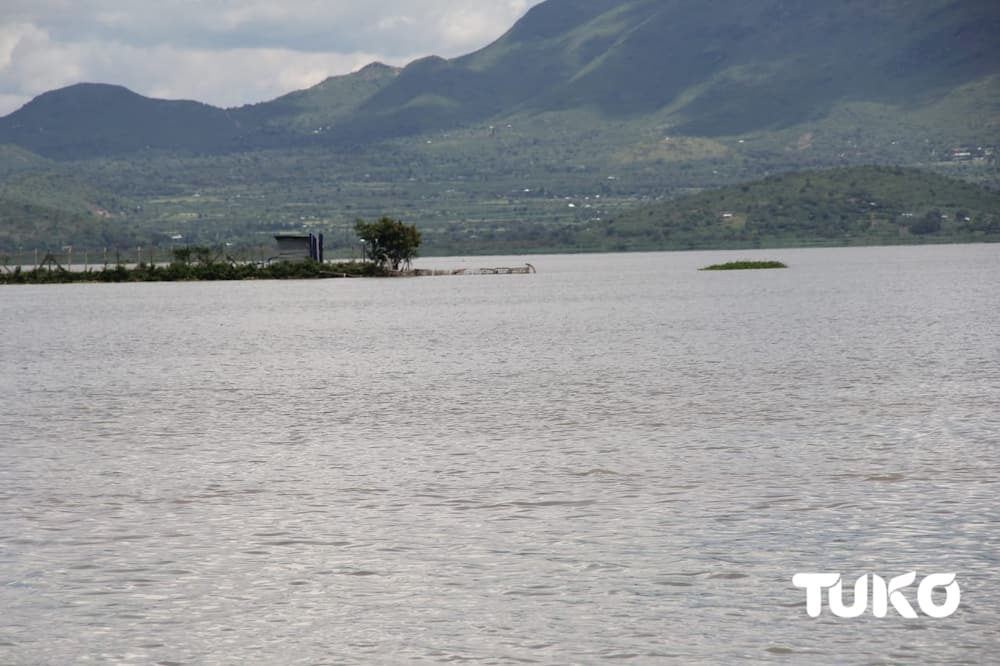 Homa Bay fisherman jumps, dies in Lake Victoria while escaping arrest during curfew