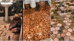 Woman Spends 16 Hours Gluing Coins to Her Bathroom Floor, Shares Cute Video