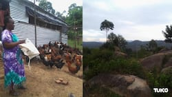 Vihiga: Scarcity of Arable Land Sparks Vihiga Residents' Creativity to Generate Income