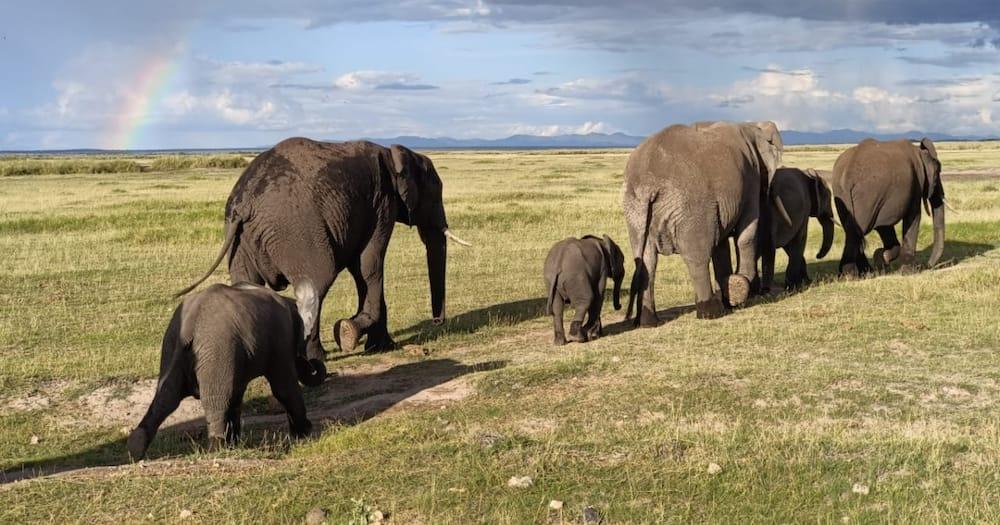Paula Kahumbu, Sammy Safari: Kenyans Win Whitley Award for Their Efforts in Protecting Elephants, Turtles'