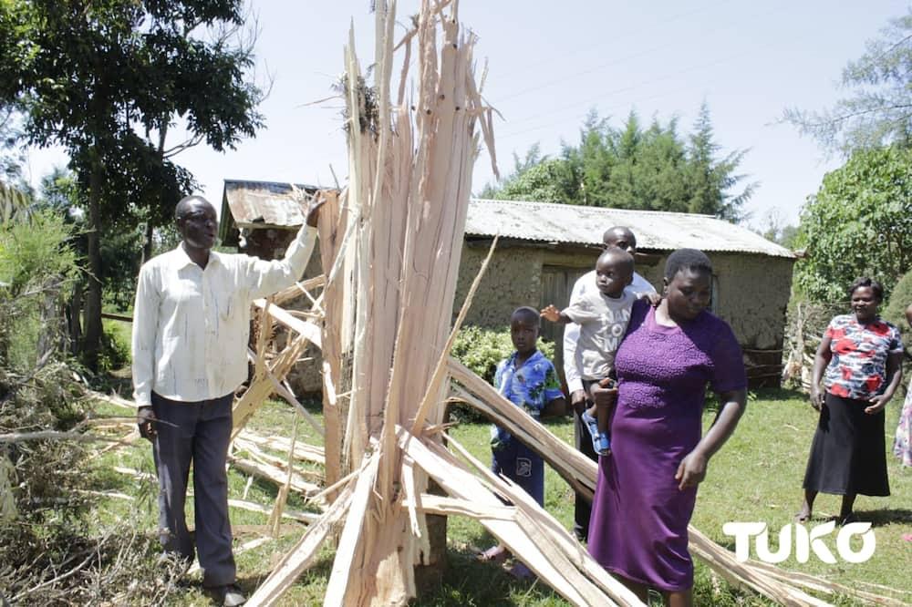 Kakamega: Familia yaishi kwa hofu baada ya radi kupiga na kupasua mti bomani mwao