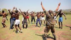 Makurutu, maafisa wa KDF huko Kwale wachana mbuga baada ya kuvamiwa na nyuki