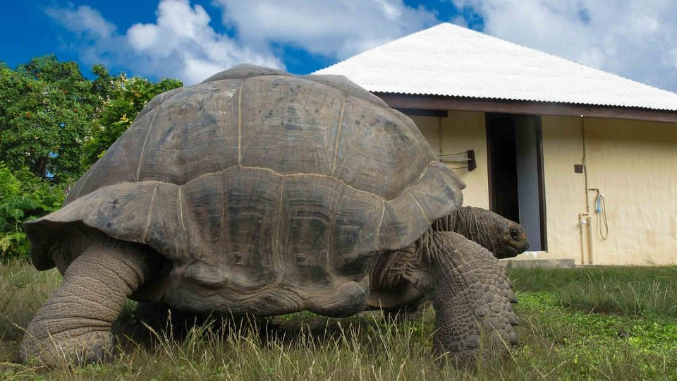170-years-old world's biggest tortoise weighs 340kg