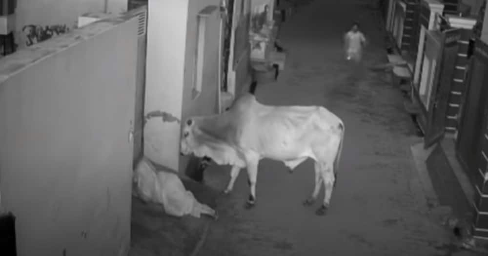 Brave boy saves grandmother from bull attack