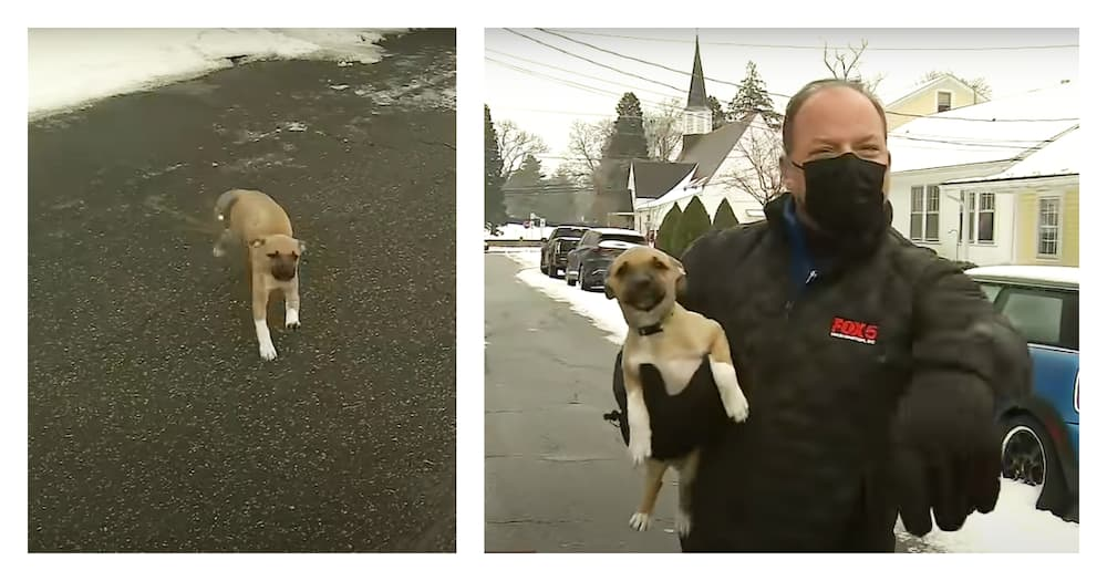 Puppy becomes an internet sensation after interrupting live TV report