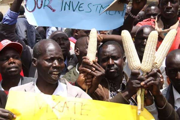 Crisis looms as North Rift MPs vow to rally farmers against delivering maize to NCPB