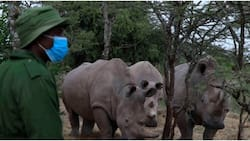 3 More Northern White Rhino Embryos Created to Save Species from Extinction