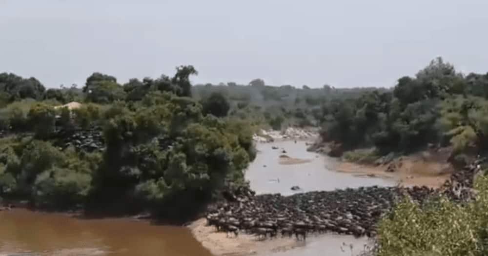 Mara Ngenche: NEMA yafunga kambi ya kutalii katika mbuga ya Maasai Mara