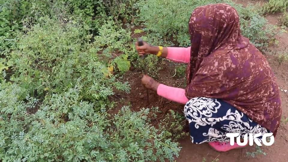 Tana River girls digging holes